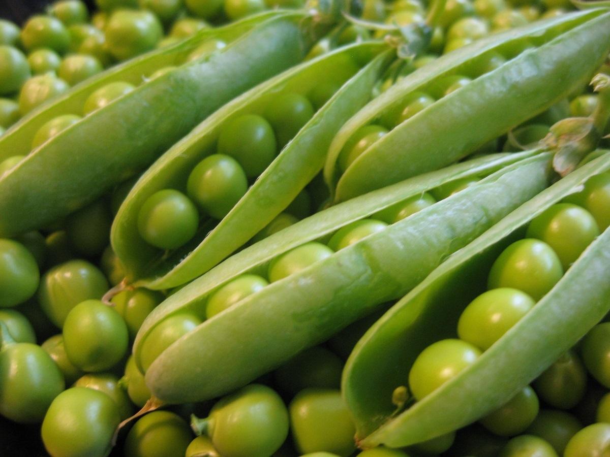 Дорожка для зеленого горошка