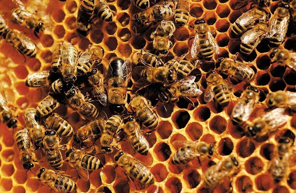 Пчелиные суеверия