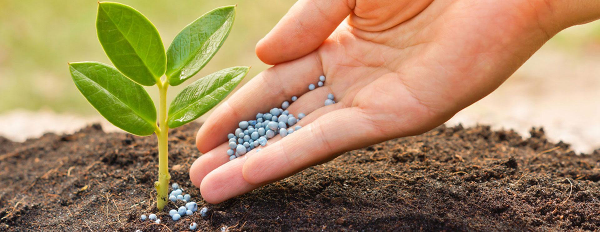 Кушать подано! Технологии внесения минеральных удобрений в почву