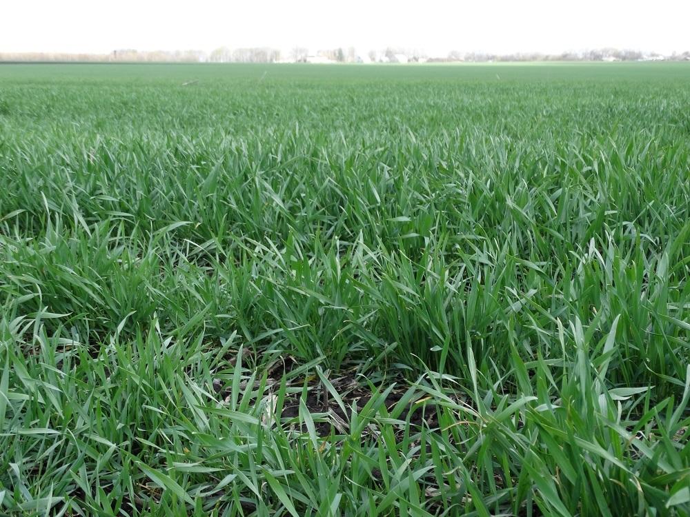 Земельный опрос. Почему аграрии против введения рынка земли