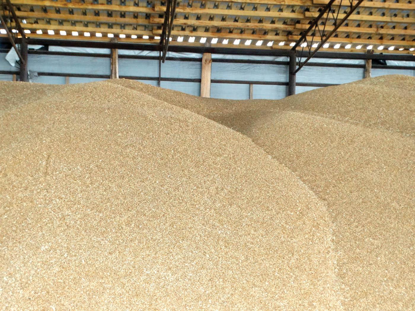 Самозігрівання та злежування зерна