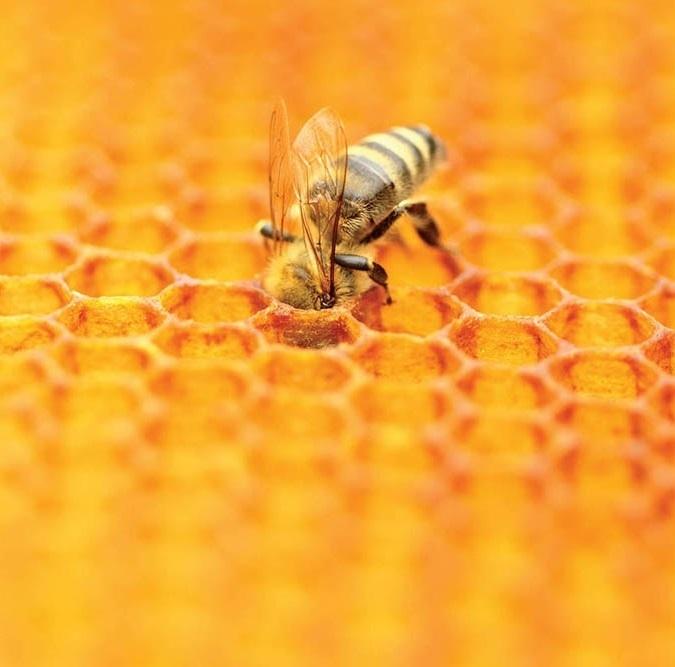 Вперті бджоли ще гудуть!