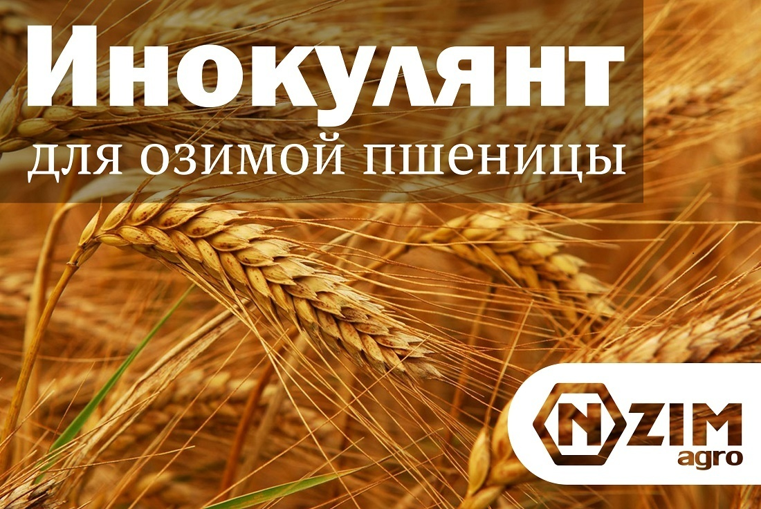 Инокулянт для озимой пшеницы. Как обеспечить защиту и питание?