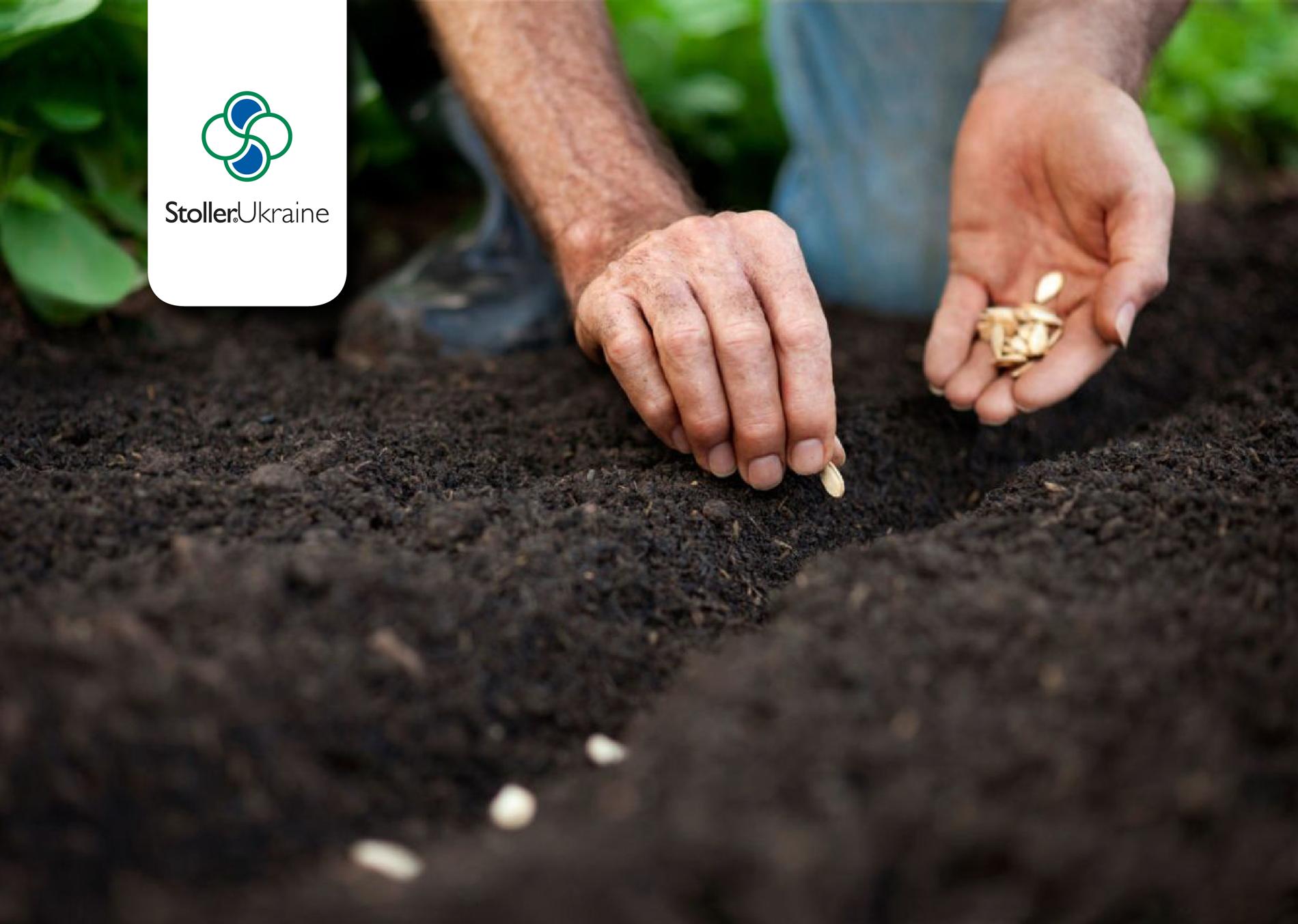 Передпосівна обробка насіння – перший крок до високого врожаю