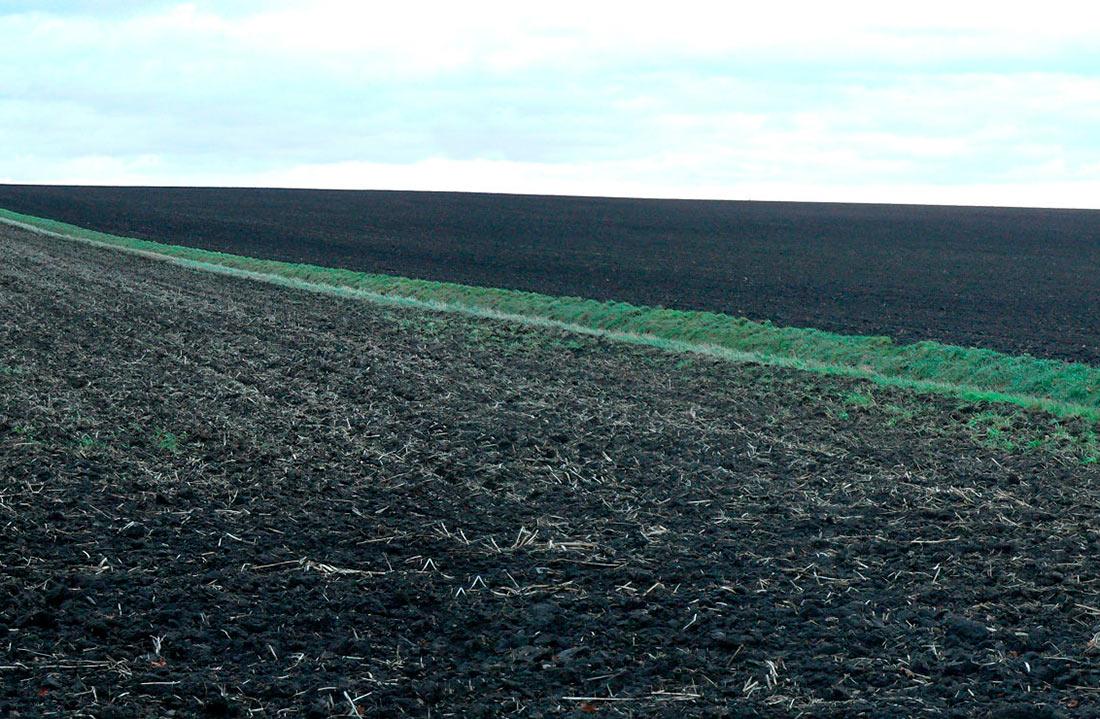 Иностранные фермеры хотят получить украинскую землю