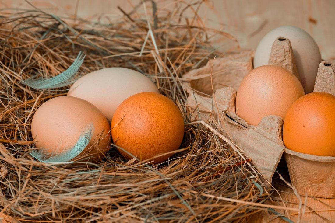 По итогам 2019 года выпуск яиц значительно вырос