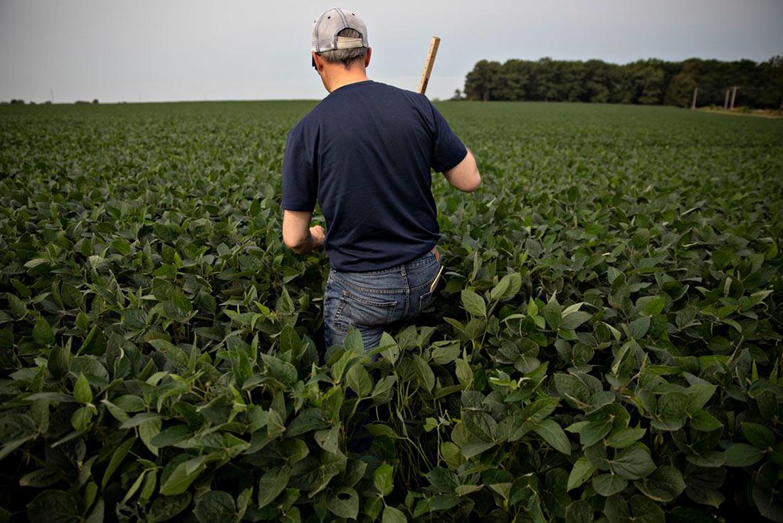 Правительство сократило господдержку аграриев на две трети