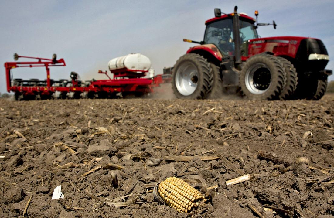 Рассматривается возможность господдержки для аграриев, выращивающих биоэнергетические культуры