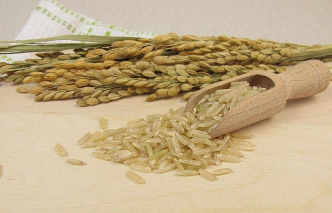 Ученые определили новую стратегию повышения урожайности рисового зерна