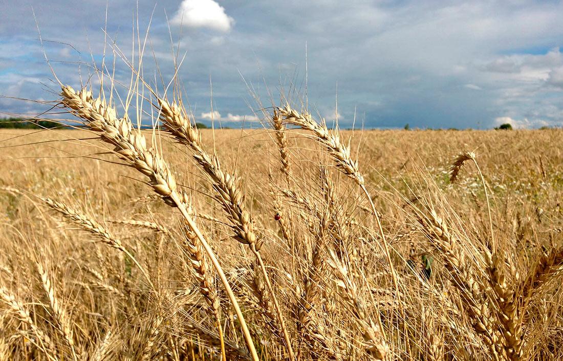 Украина нарастила внешние поставки зерна