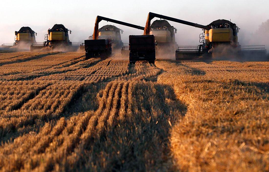 Урожай зерновых и зернобобовых 2019 года собрали на 99%