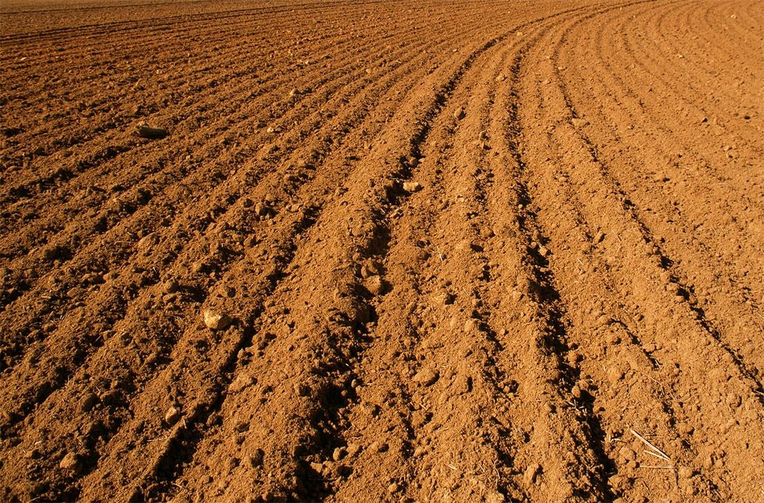 В Госгеокадастре не зарегистрировано 4,3 млн. га сельхозземель