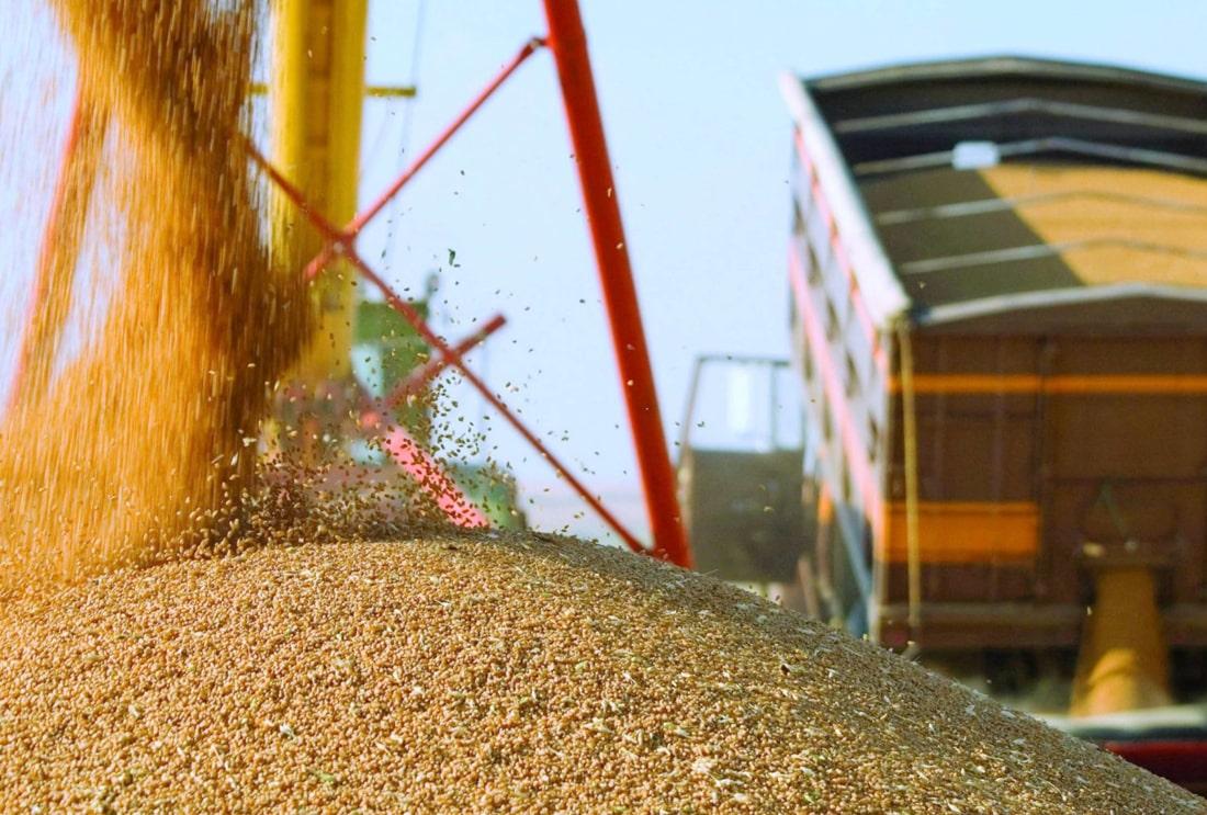 За неделю украинские морпорты заметно сократили экспорт пшеницы