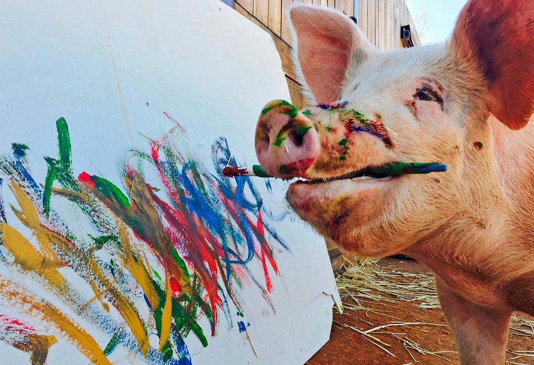 Удивительная художница Pigcasso (ФОТО)