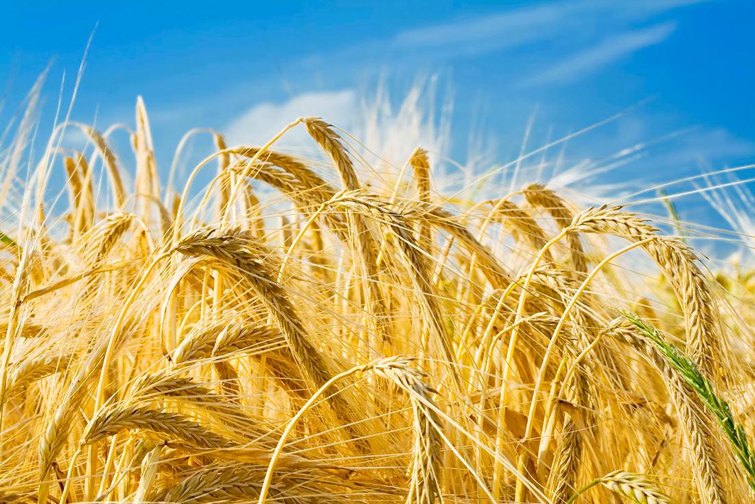 Аграрии попросили Шмыгаля вернуть Минагрополитики