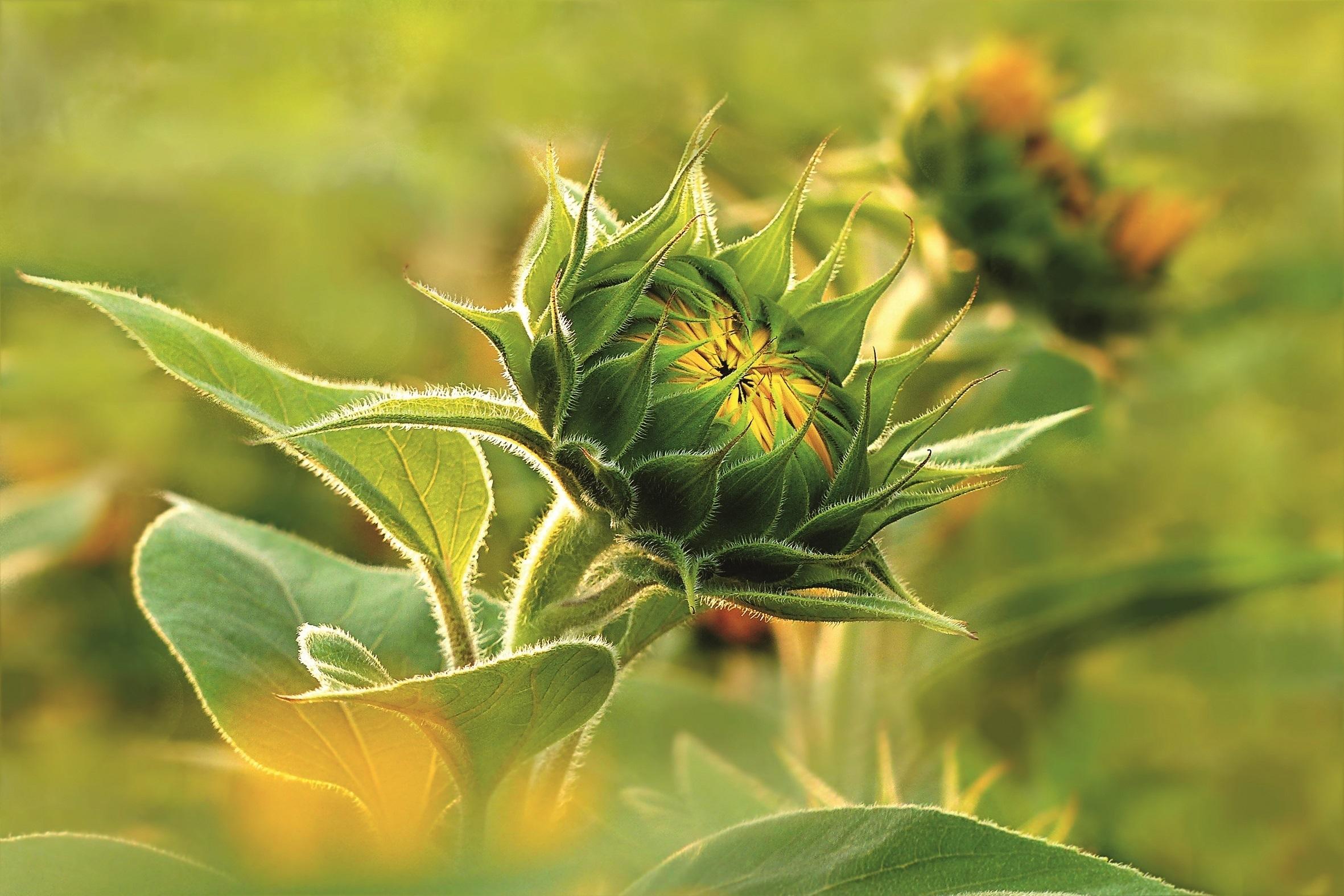 Belchim Crop Protection: тільки інновації та висока ефективність. Наш розвиток. Ваше зростання