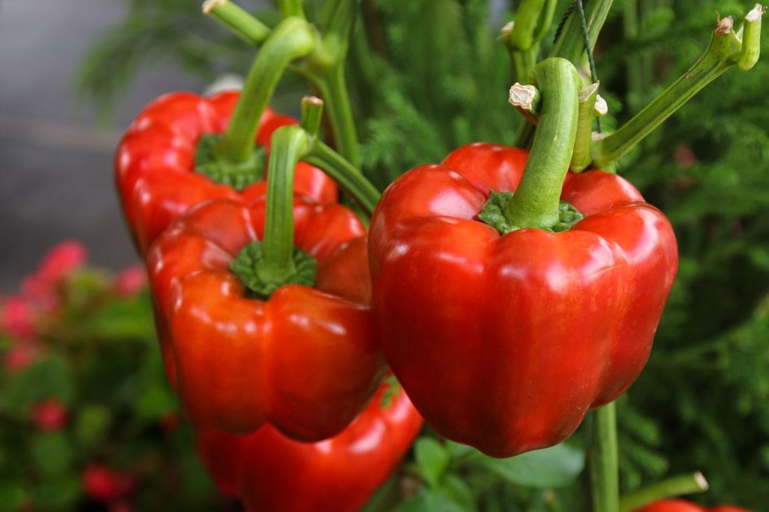 Производители начали активно улучшать окрас фруктов и овощей