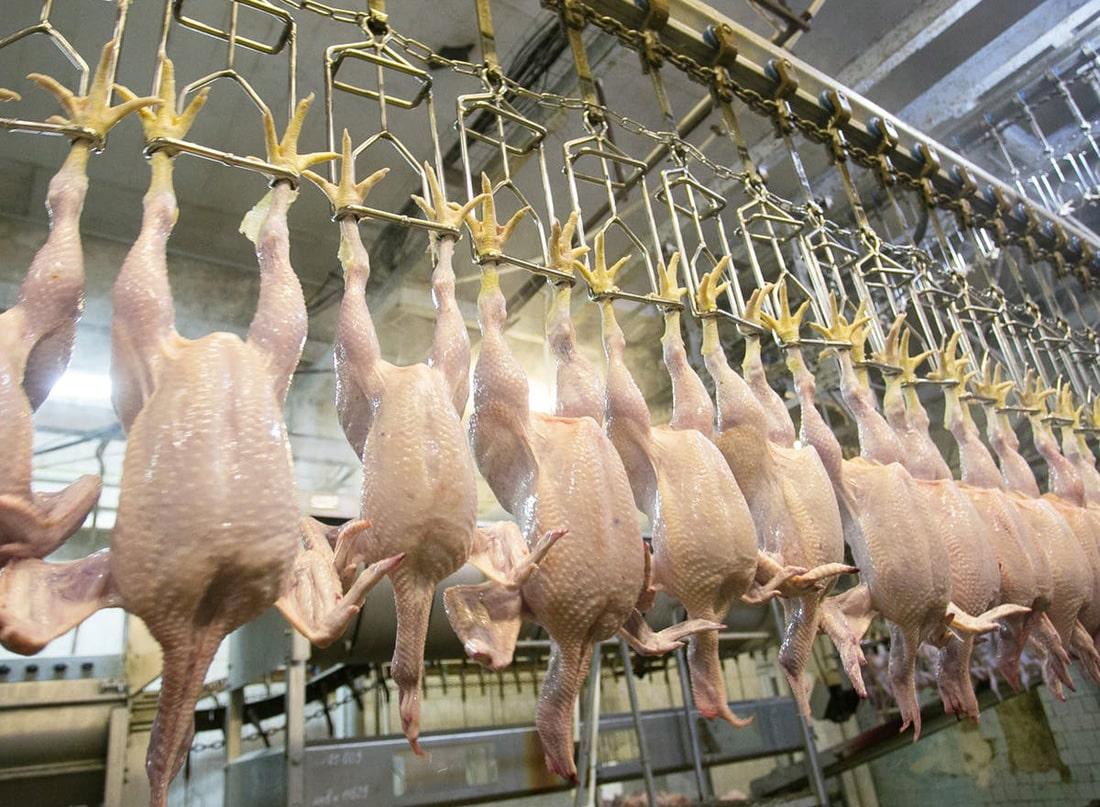 Украина удерживает позицию мощного экспортера мяса птицы