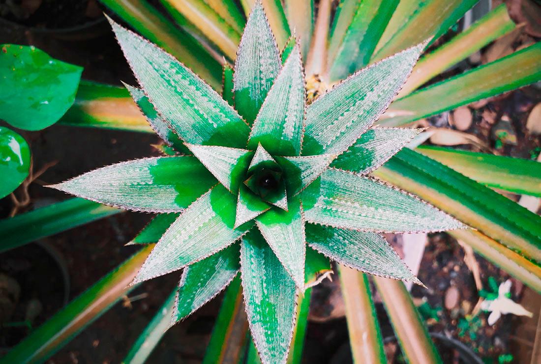 В Лондоне представили экологические ткани: кожу из кактуса и шерсть из листьев ананаса (ФОТО)