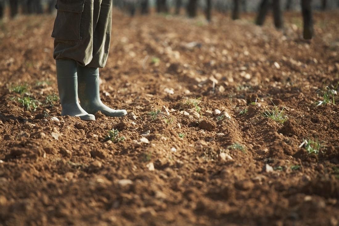 Восстановление Минагрополитики поспособствует открытию рынка земли — мнение