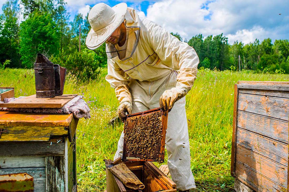 Высоцкий анонсировал встречи с пчеловодами