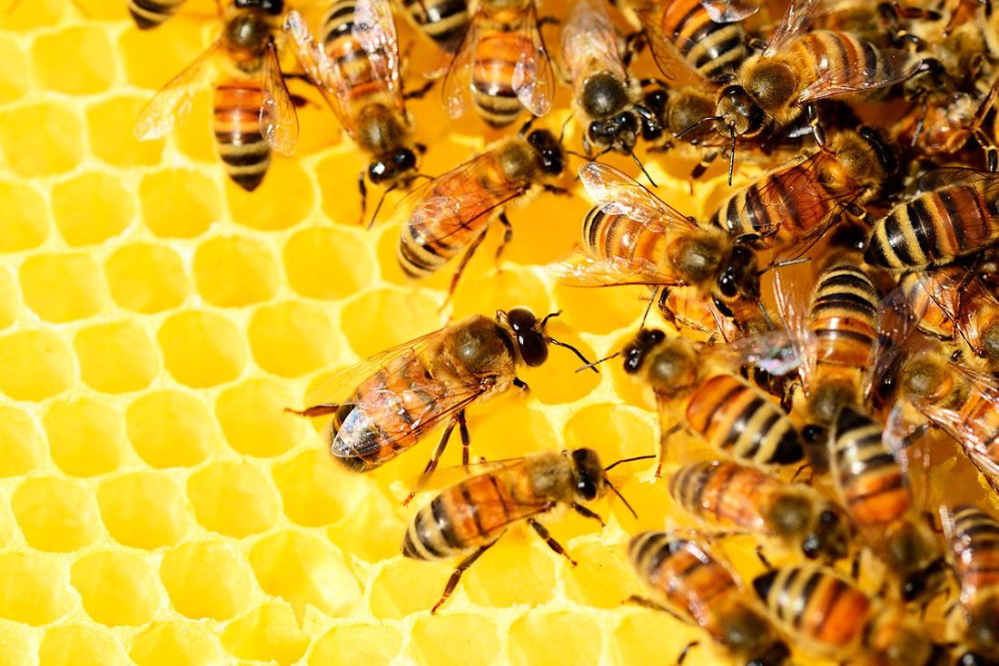 Департамент агропромышленного развития Хмельницкой ОГА рассказал о дотациях пчеловодам