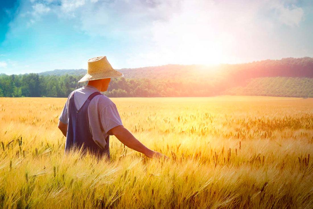 Господдержка фермеров: появились дополнительные направления
