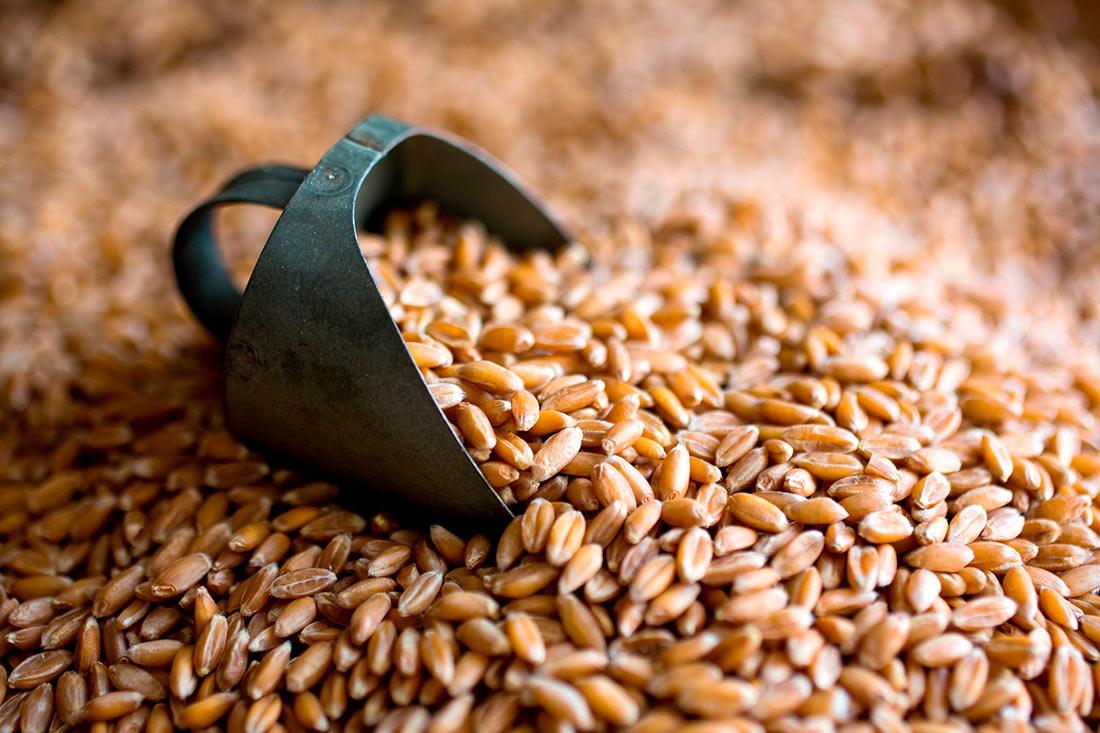 Появились новые данные по объемам экспорта зерна
