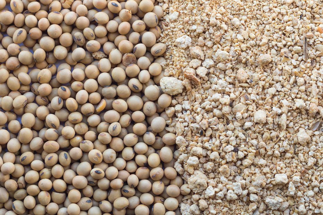 Аналитики прояснили ситуацию на рынке соевых бобов и соевого шрота