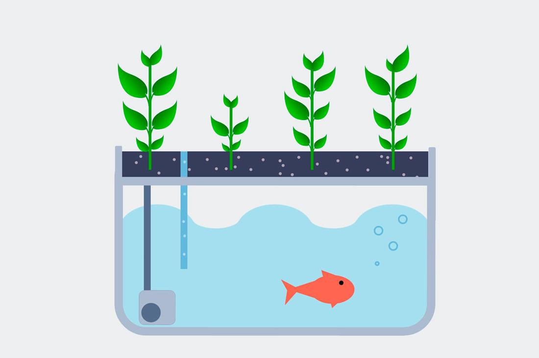 Немцы сосредоточились на изучении коммерческой выгоды от совмещенного рыбно-овощного производства