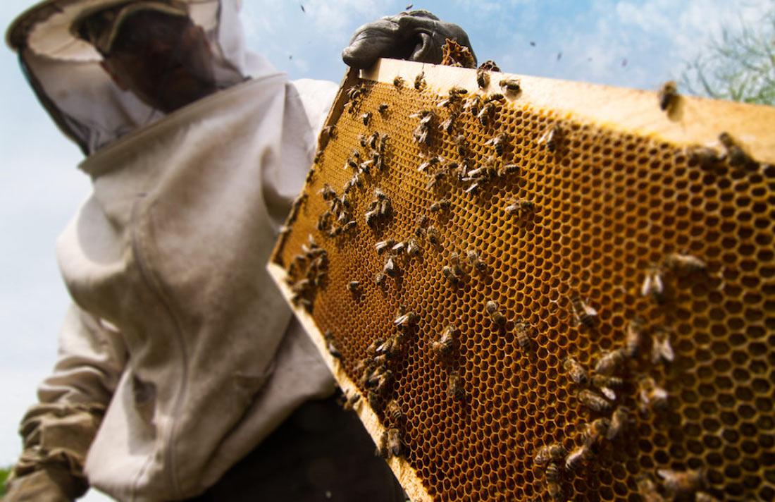 Правительство направит фермерам и пчеловодам средства на развитие