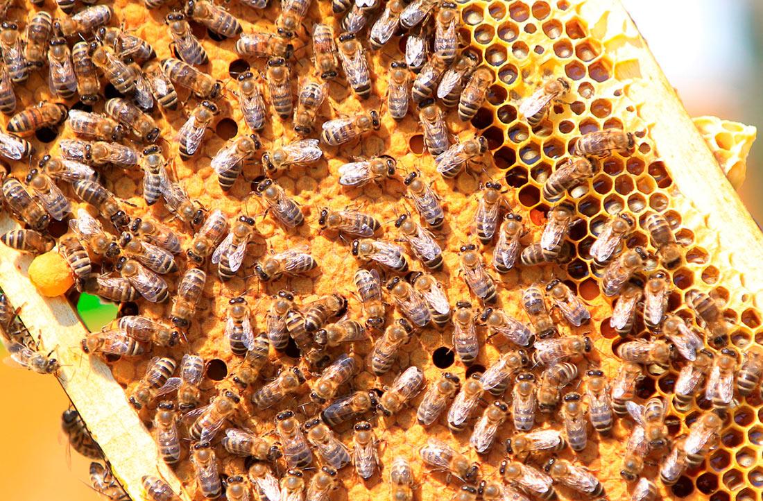 Про массовую гибель пчёл, запрещенные препараты и меры Deutsche Bahn