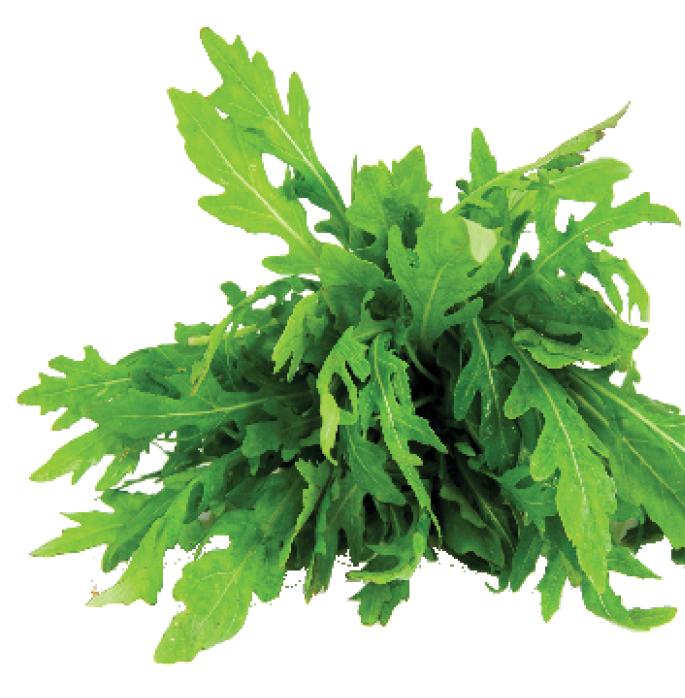Зеленьизвоздуха, или выращиваниерукколы с помощью аэропонных установок