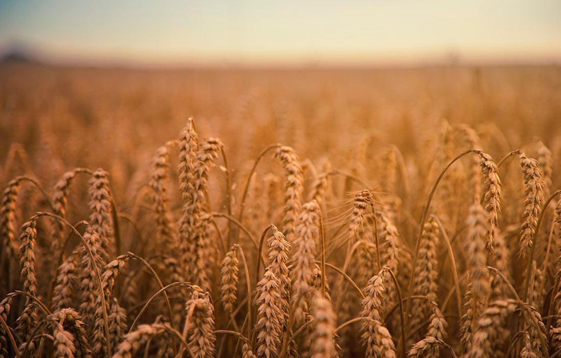 Украина может лишиться 1 млн. тонн зерновых
