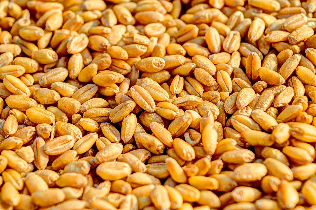 Украинская зерновая ассоциация пожаловалась на таможенный произвол