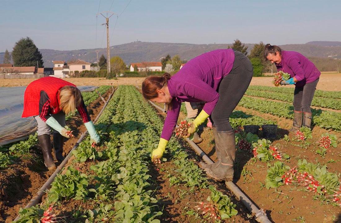 В Польше беспокоятся, что стране не хватит наших сезонных работников