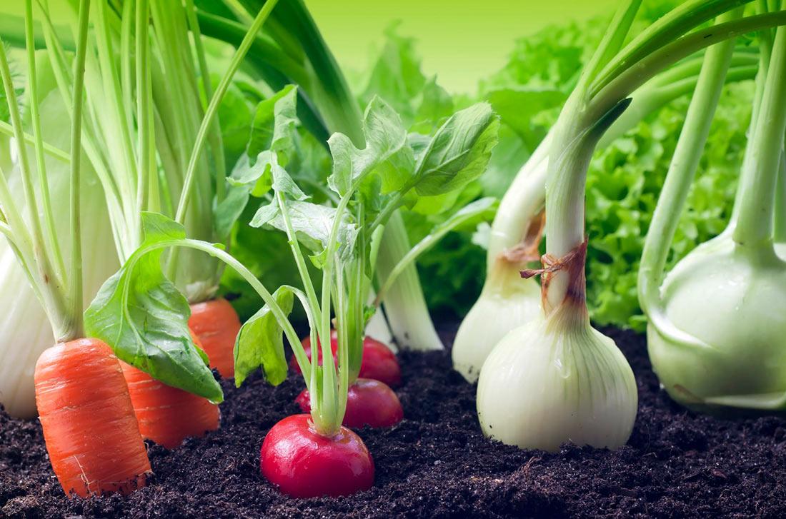 WikiHow: Как выращивать овощи