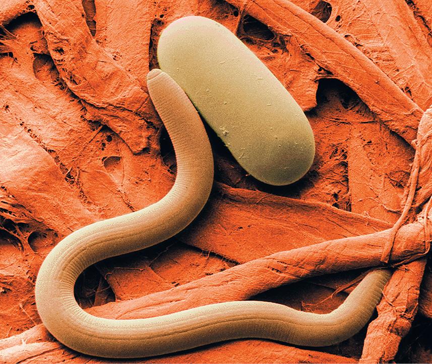 Роль почвенных простейших микроорганизмов и нематод