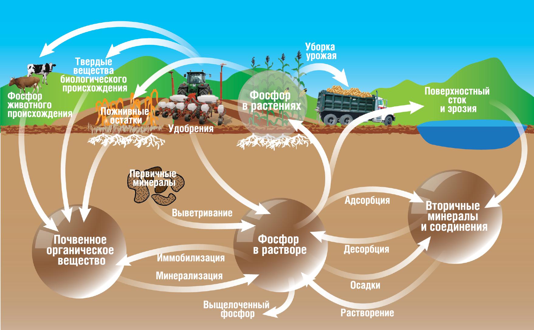 фосфорный цикл