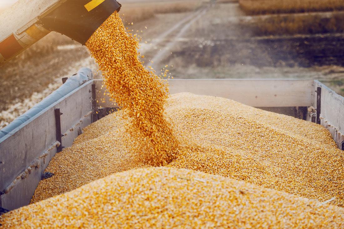 УЗА поделилась оптимистичным прогнозом урожая зерновых и масличных