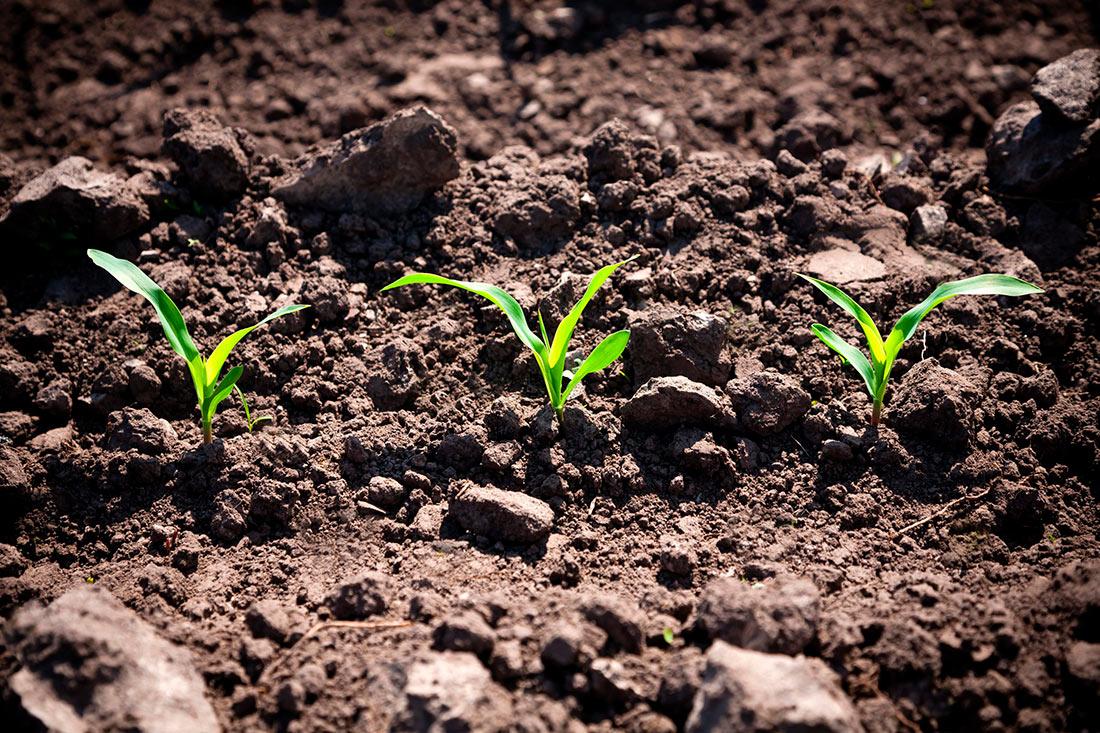 Высоцкий рассказал, сколько аграрии посеяли