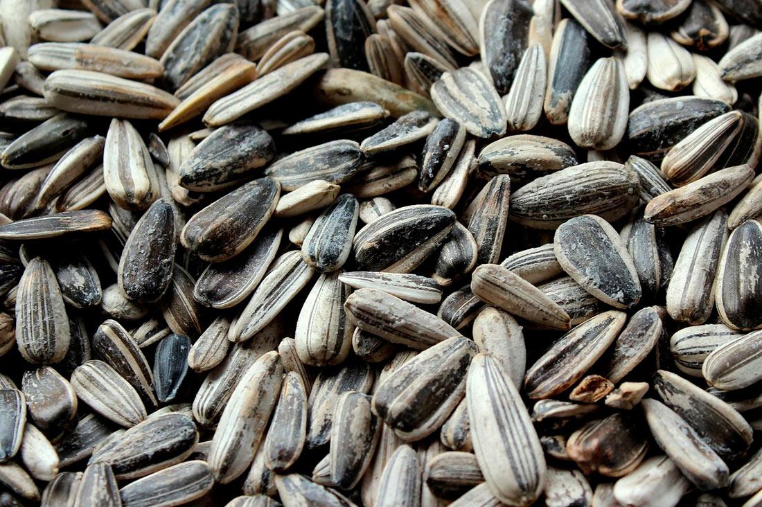 Зерновые: обзор НААН + прогноз