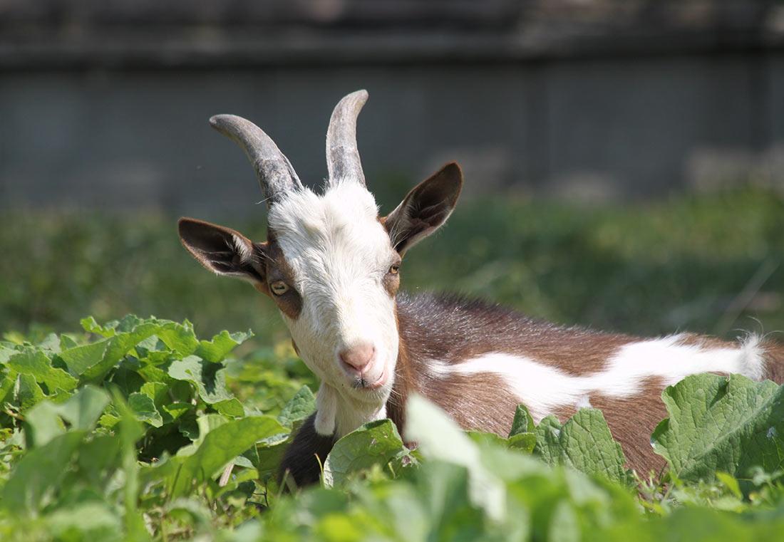 25 интересных фактов о животных (ФОТО)