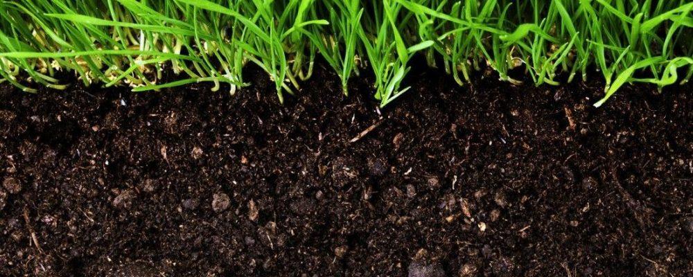 Катионобменная способность почвы и гумус