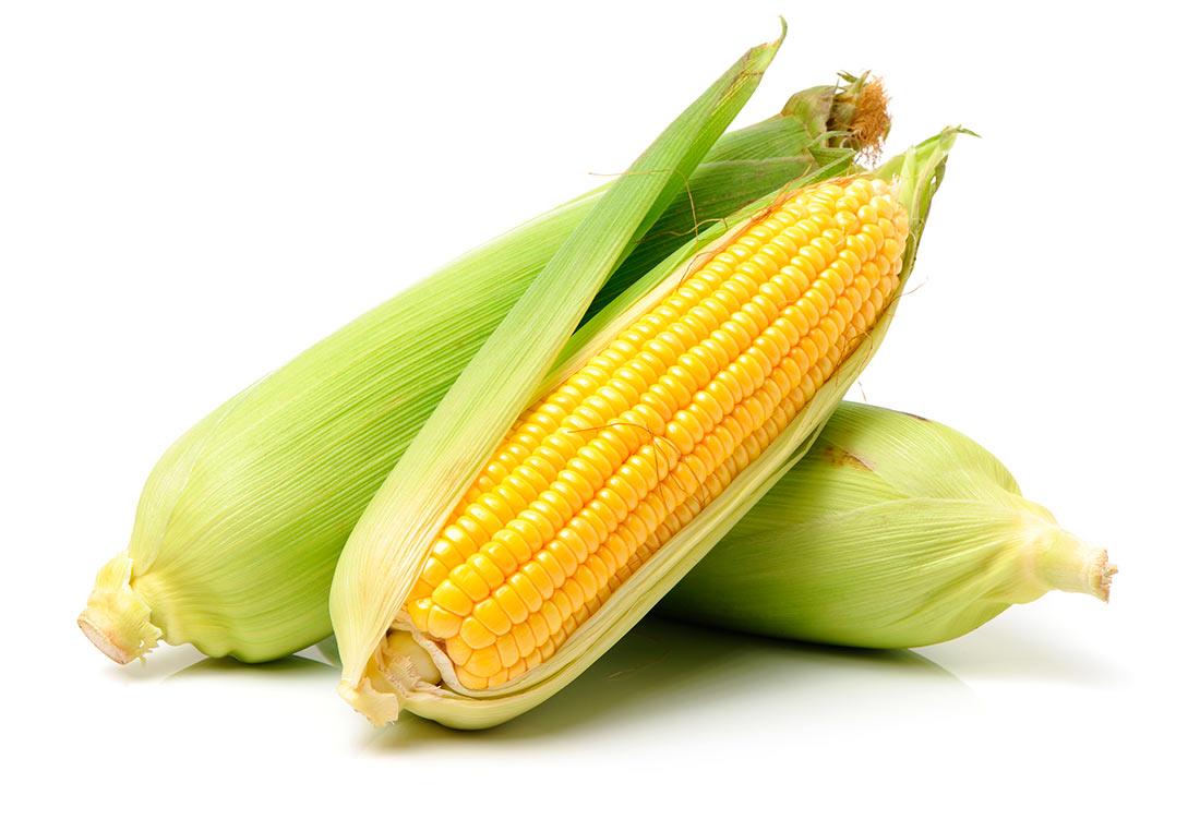 Кукуруза: экспорт, цены, производство, прогнозы
