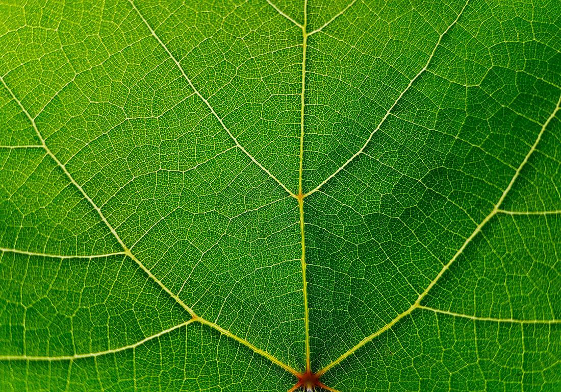 Новая нанотехнология помогает растениям поглощать почти 100% питательных веществ