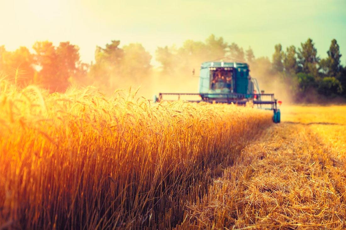 Жатва-2020: украинские аграрии собрали 13,9 млн. тонн зерновых и зернобобовых