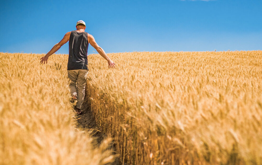 Інноваційний партнер зернових колосових