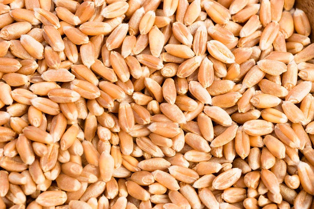 Экспорт зерновых: данные на сентябрь-2020
