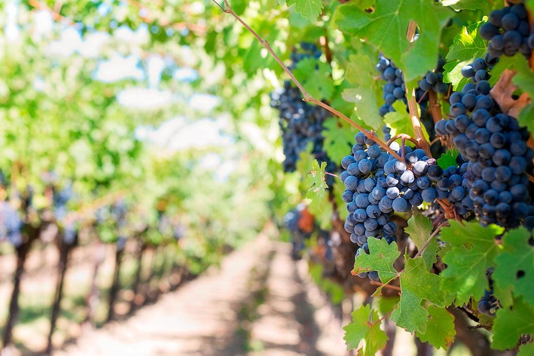 Коронавирус стал причиной огромных убытков для виноделов во всем мире